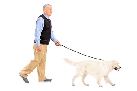 seniors walking: Full length portrait of a senior man walking a dog, isolated on white background