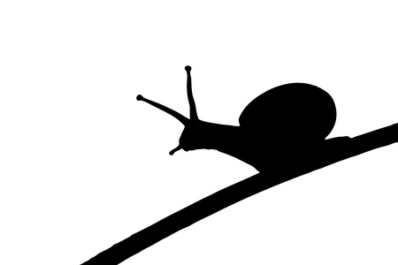 slowly: A silhouette of a snail on a leaf isolated on white background