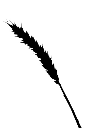 A silhouette of a blade of wheat isolated on white background photo