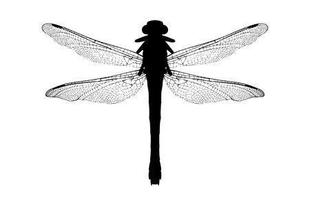 A silhouette of a dragonfly isolated on white background photo