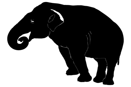 A silhouette of an elephant isolated on white background Stock Photo - 15273895