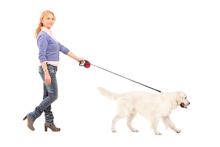 people walking white background: Full length portrait of a woman walking a retriever dog isolated on white background Stock Photo