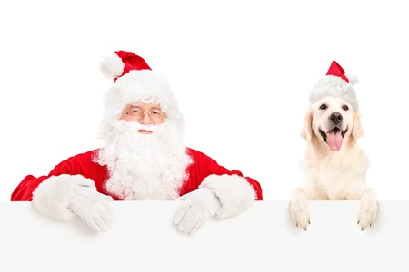 labrador christmas: Santa Claus and dog wearing christmas hats and posing behind a billboard isolated on white background