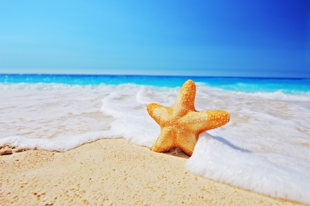 invertebrates: Starfish on a beach with clear sky and wave, Greece