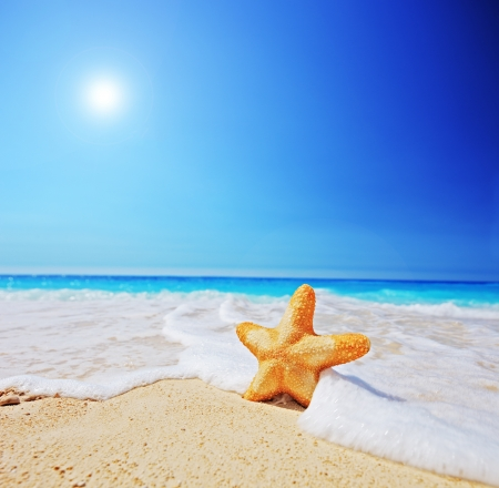 starfish beach: A view of a starfish on a beach with clear sky and wave, shot with a tilt and shift lens