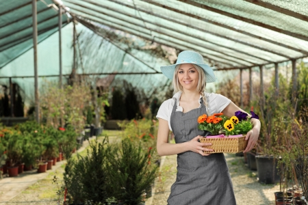 horticulturist: Female gardener posing with a basket full of flower pots in a hothouse