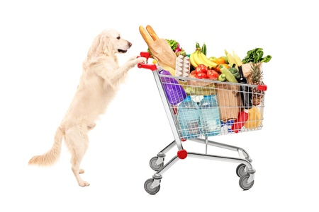 Funny retriever dog pushing a shopping cart full of food products, isolated on white background photo