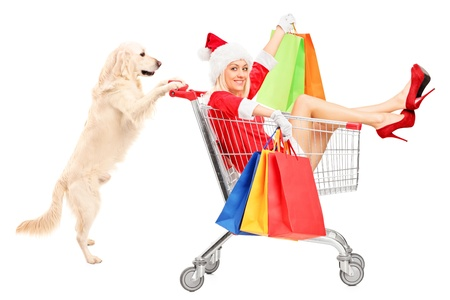 woman shopping cart: Retriever dog pushing a woman wearing Santa Claus costume in a shopping cart isolated on white background