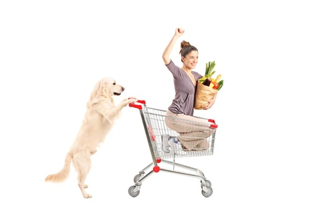 White retriever dog pushing a woman in a shopping cart isolated on white background photo