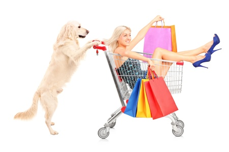 shopping trolleys: White retriever dog pushing a woman with shopping bags in a cart isolated on white background Stock Photo