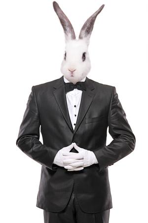 head wear: Coniglio in posa in un abito cravatta a farfalla isolato su sfondo bianco Archivio Fotografico