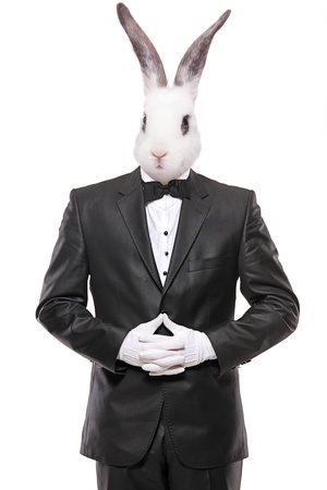 rabbit standing: Rabbit posing in a bow tie suit isolated on white background