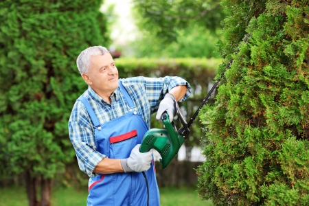 tree trimming: Manual worker trimming a tree in a garden Stock Photo