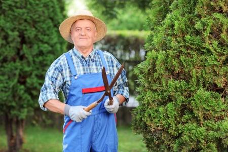 jardinero: Obrero recortar una cerca en un jardín