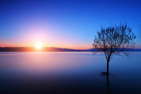 日没でマケドニア、オフリド湖での木のシルエット