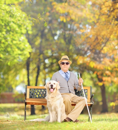 Senior blind gentleman sitting on a wooden bench with his labrador retriever dog, in a park, shot with a tilt and shift lens Stock Photo