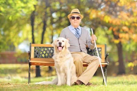 persiana: Anziano signore cieco seduto su una panchina di legno con il suo cane labrador retriever, in un parco Archivio Fotografico