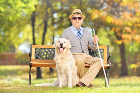 Senior blind gentleman sitting on a wooden bench with his labrador retriever dog, in a park photo