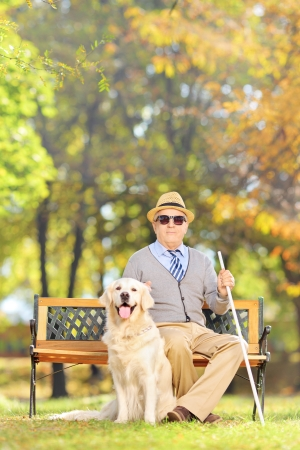 Senior blind man sitting on a wooden bench with his labrador retriever dog, in a park photo