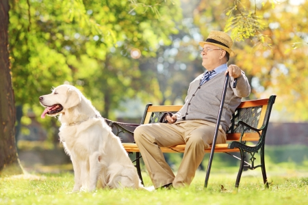 Senior gentleman sitting on wooden bench with his labrador retriever and relaxing in a park