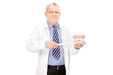 denture: Middle aged male dentist holding a teeth sample made out of plaster cast and toothbrush isolated Stock Photo