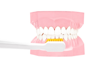 prothetic: Studio shot of a dentures made out of plaster cast and tooth brush isolated on white background