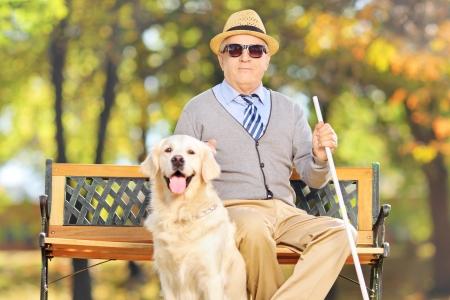 Senior blinde man zittend op een bankje met zijn labrador retriever hond, in een park Stockfoto