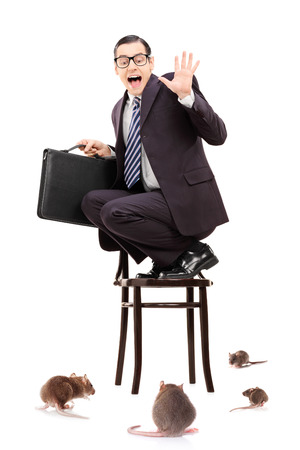 afraid man: Terrified young businessman standing on chair in the middle of rat invasion isolated on white background