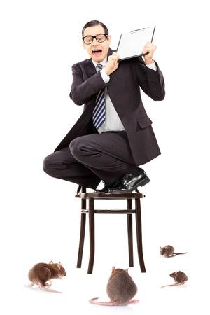 invasion: Terrifi� d'affaires debout sur une chaise pour se d�fendre de l'invasion de rat isol� sur blanc