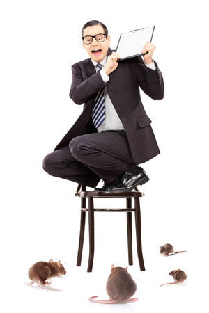 invading: Terrified businessman standing on chair defending himself from rat invasion isolated on white  Stock Photo