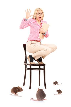 Scared žena stojící na židli během krysí invazi na bílém pozadí Reklamní fotografie