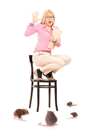 Scared woman standing on chair during a rat invasion isolated on white background photo