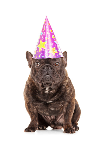 Studio shot of a bulldog with a party head isolated on white background photo