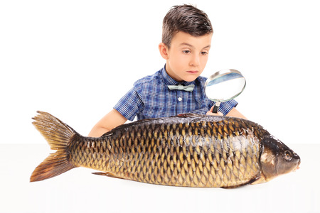 investigating: Boy examining a fish with magnifying glass isolated on white background