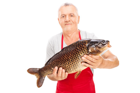 fishmonger: Mature fishmonger holding a common carp isolated on white background