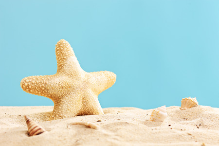 dried fish: Studio shot of a starfish in sand on blue background Stock Photo