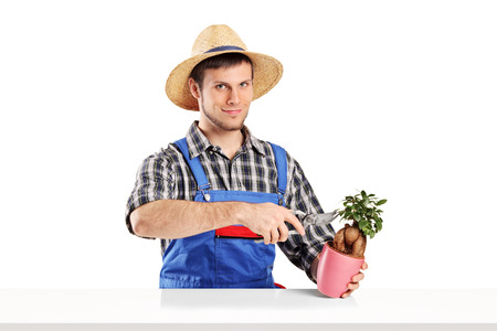 Male gardener trimming a plant isolated on white background photo