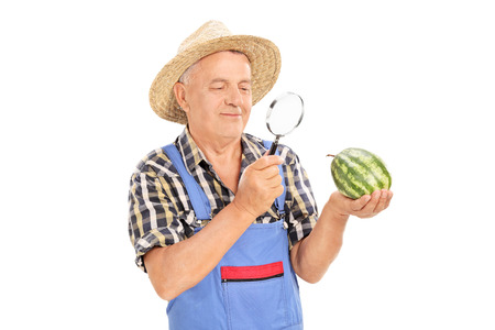 Mature farmer inspecting a small watermelon through a magnifying glass isolated on white background
