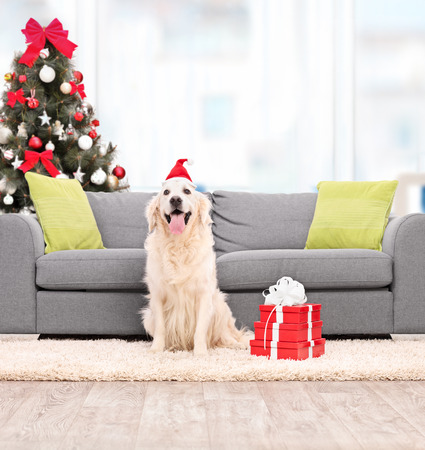 tilt shift: Dog with Santa hat sitting by a sofa indoors shot with tilt and shift lens Stock Photo