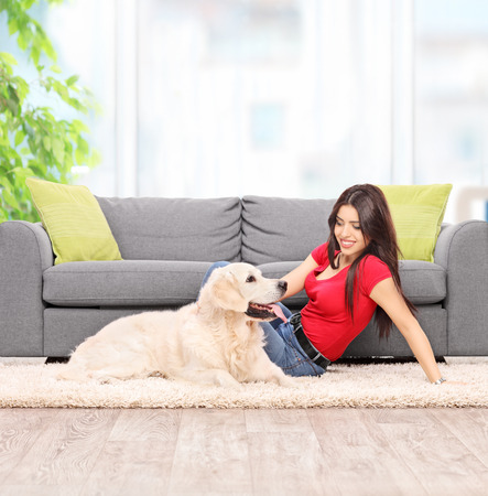 pets: Young woman petting a dog seated on carpet next to a modern gray sofa at home shot with tilt and shift lens Stock Photo