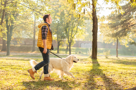Profile shot of a young guy walking his dog in a park on a sunny autumn day 스톡 콘텐츠
