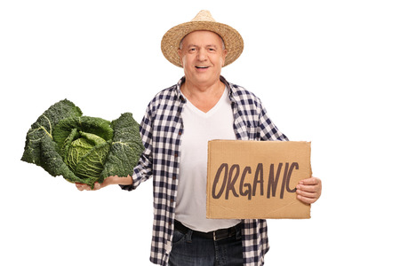 savoy cabbage: Senior farmer holding a Savoy cabbage and a cardboard sign that says organic isolated on white background