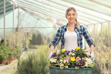 Joyful female gardener holding a rack of flowers in a greenhouse Stock Photo