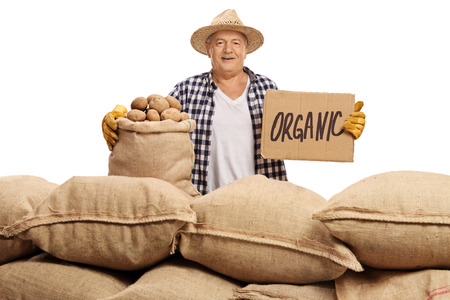 Elderly agricultural worker with burlap sacks filled with potatoes and a cardboard sign that says organic isolated on white background