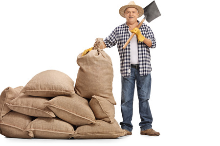 sackful: Full length portrait of a mature farmer with a shovel standing next to a pile of burlap sacks isolated on white background