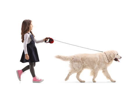 Full length profile shot of a girl walking a labrador retriever dog isolated on white background