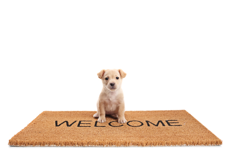 Small puppy dog sitting on a door mat with written text welcome isolated on white