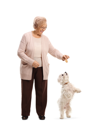 Full length portrait of a senior woman giving a biscuit to a maltese poodle dog isolated on white background