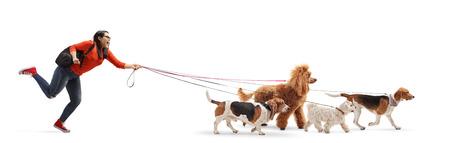 Colpo integrale di una studentessa dog walker con un barboncino maltese, un barboncino rosso, un beagle e un cane basset hound isolati su sfondo bianco