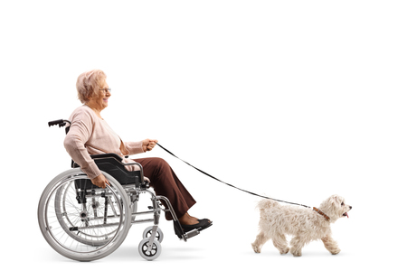 Full length profile shot of an elderly woman in a wheelchair with a dog on a leash isolated on white background